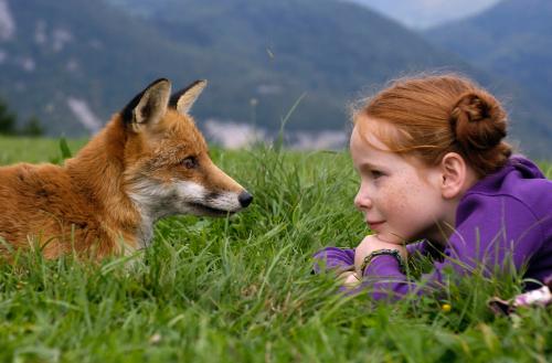 wild fox screen